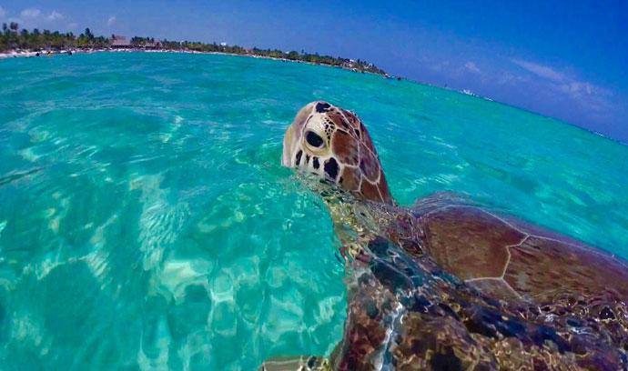 Playas-Akumal-Riviera Maya